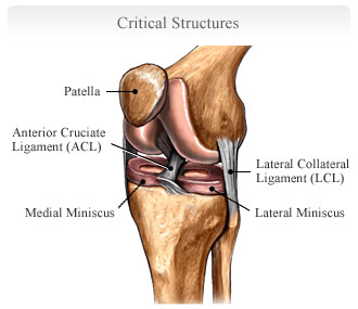 ligaments-front